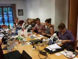 Trüffeln bestimmen - ohne Mikroskop unmöglich