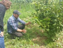Erster Trüffelfund vier Jahre nach Auspflanzung