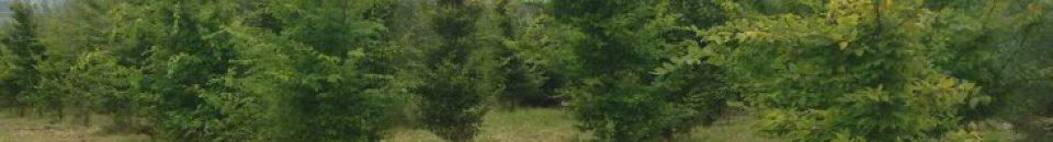 Erste produktive Trüffelplantage in Niedersachsen