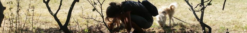 Trüffelberater bilden Hundeführer aus